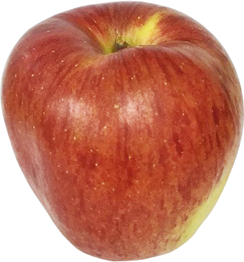 red_apple-15_kirinuki_355x380